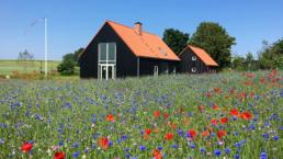 Blomstereng med hus