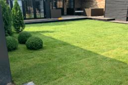 Ny have med græs